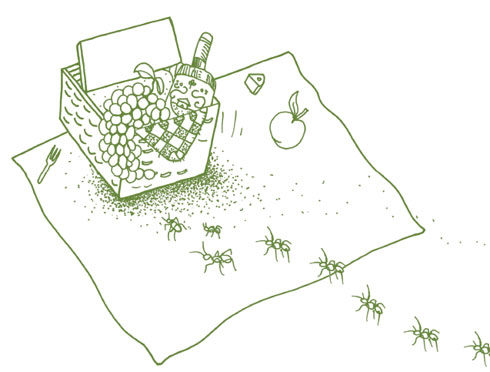 Illustration of ants crawling toward picnic basket