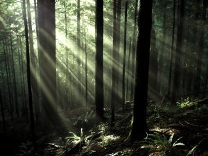 Trees with light coming through