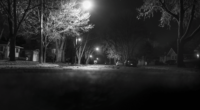 Black and white photo of trees along a trail at night