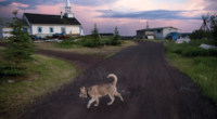 A dog walks near the Church of the Holy Family in Łutsël K'é, Northwest Territories. The church was built near the present day settlement in the 1930's and moved to its current location at the tip of the peninsula